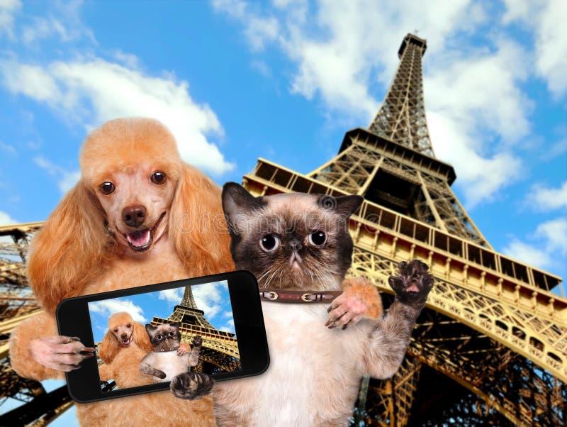 Σκυλί και γάτα μόνος-πορτρέτου στοκ φωτογραφία με δικαίωμα ελεύθερης χρήσης