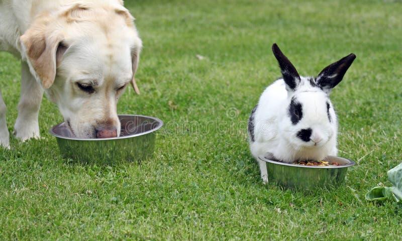 Σκυλί και κουνέλι στοκ εικόνες με δικαίωμα ελεύθερης χρήσης