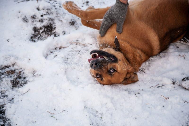 Σκυλί και ο ιδιοκτήτης του - κόκκινο παιχνίδι σκυλιών και ατόμων σε ένα ναυπηγείο στοκ φωτογραφία με δικαίωμα ελεύθερης χρήσης