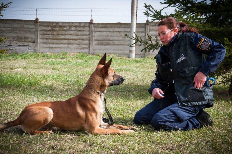 Σκυλί κατάρτισης αστυνομικών στοκ φωτογραφίες