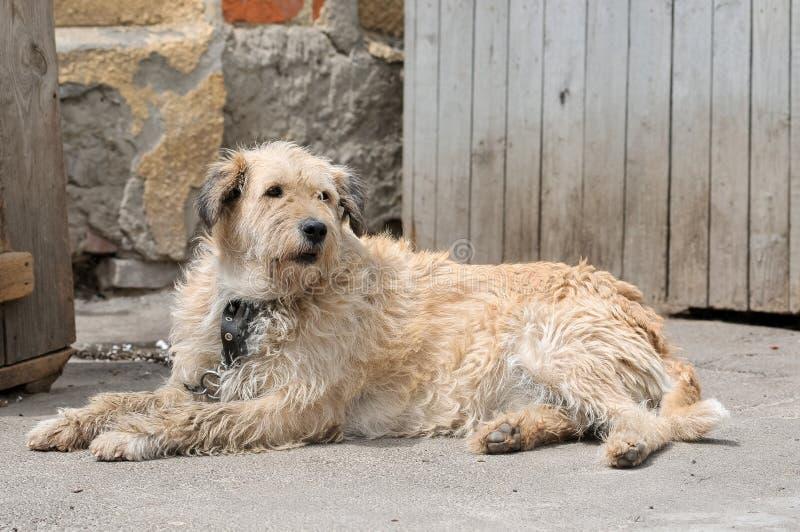 Σκυλί κατά τη διάρκεια του περπατήματος στοκ φωτογραφίες με δικαίωμα ελεύθερης χρήσης