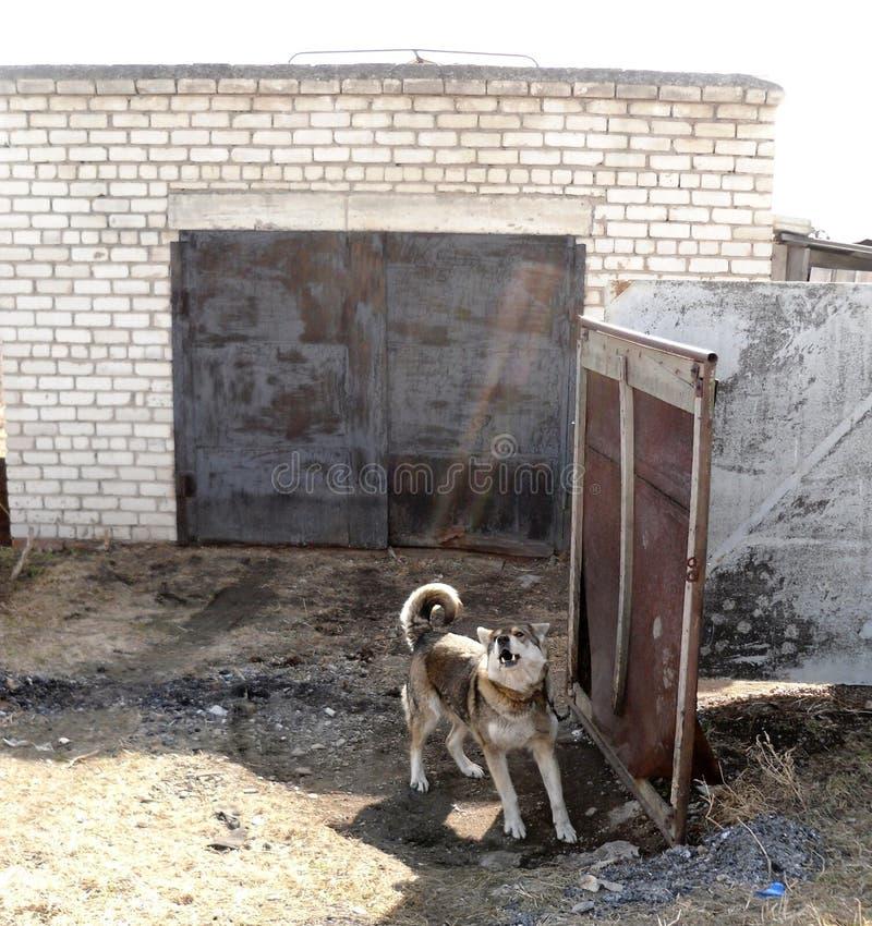 Σκυλί κοντά στο γκαράζ στοκ φωτογραφίες