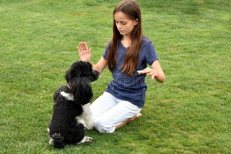 Σκυλί κοριτσιών και poodle στοκ φωτογραφίες