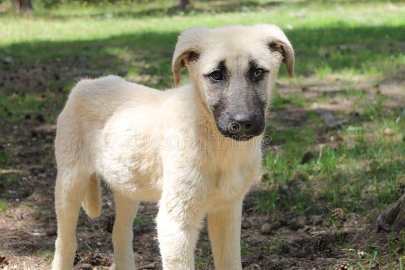 Σκυλί κουταβιών στοκ φωτογραφίες με δικαίωμα ελεύθερης χρήσης