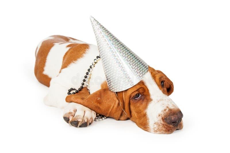 Σκυλί κυνηγόσκυλων μπασέ που φορά το ασημένιο καπέλο κόμματος στοκ εικόνες