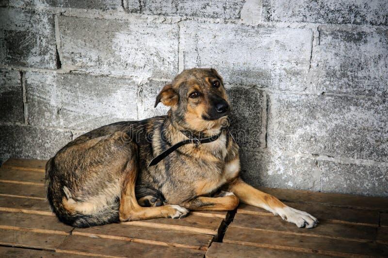 Σκυλί μέσα στο κλουβί στο καταφύγιο στοκ εικόνες