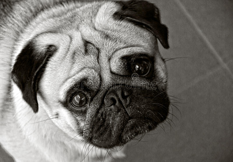 Σκυλί μαλαγμένου πηλού σε γραπτό στοκ φωτογραφία