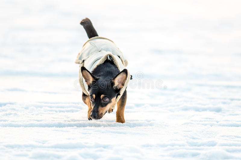 Σκυλί με τα ενδύματα στοκ φωτογραφία