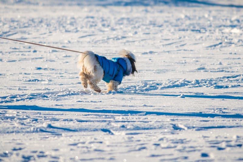 Σκυλί με τα ενδύματα στοκ φωτογραφίες
