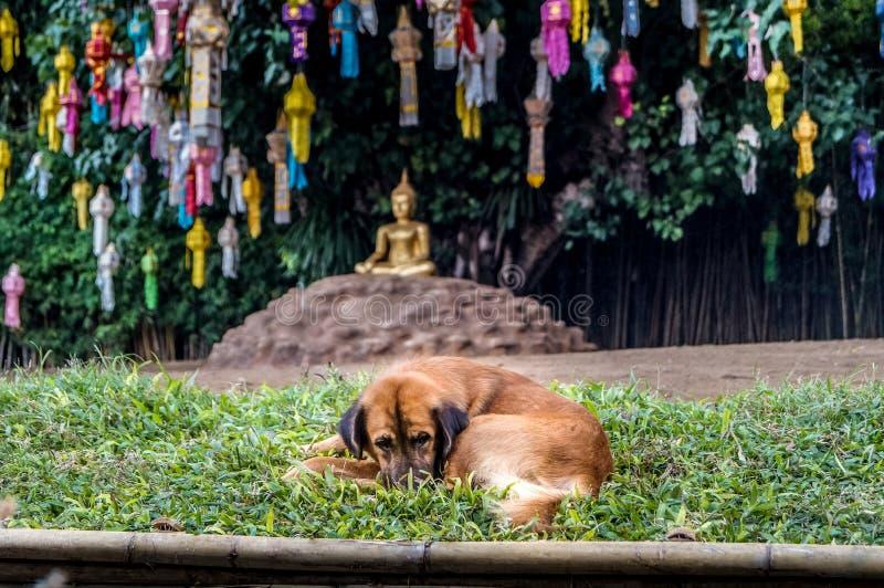 Σκυλί μπροστά από ο Βούδας με τους λαμπτήρες εγγράφου στοκ φωτογραφία με δικαίωμα ελεύθερης χρήσης