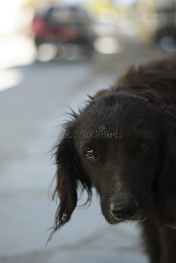 Σκυλί οδών που φαίνεται πολύ λυπημένος που εγκαταλείπεται και μόνος στοκ φωτογραφίες