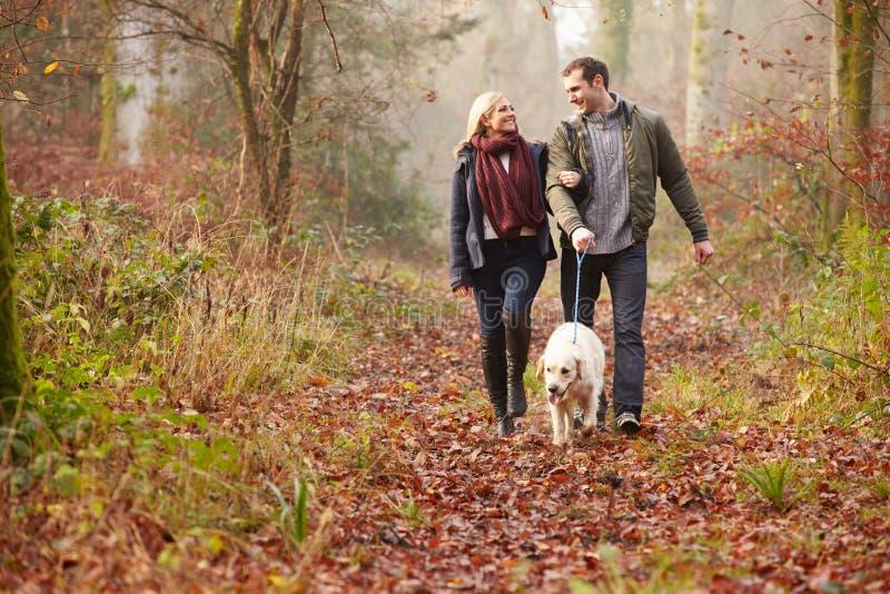 Σκυλί περπατήματος ζεύγους μέσω της χειμερινής δασώδους περιοχής στοκ εικόνα με δικαίωμα ελεύθερης χρήσης