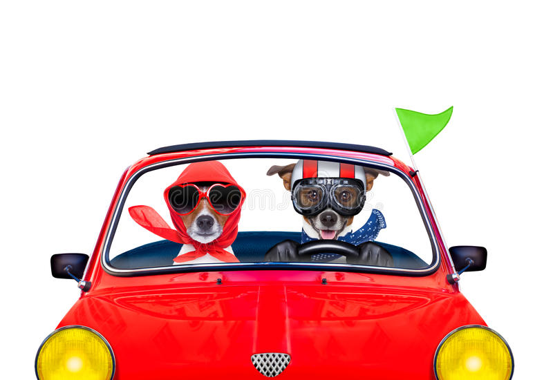 Σκυλί που ένα αυτοκίνητο στοκ εικόνες