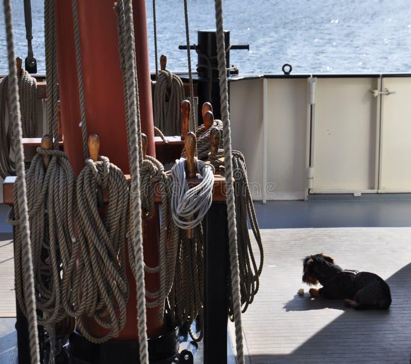 Σκυλί που βρίσκεται στη γέφυρα ενός γιοτ στοκ εικόνα