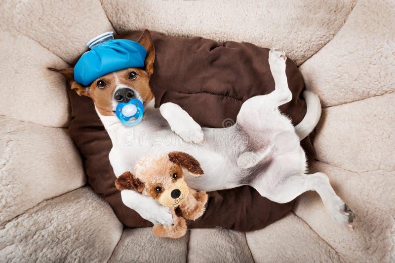 Σκυλί που κοιμάται ή που στηρίζεται την απόλυση και τον πονοκέφαλο στοκ φωτογραφία