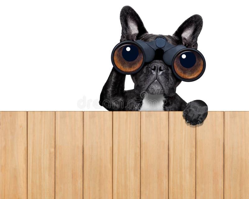 Σκυλί που κοιτάζει μέσω των διοπτρών στοκ φωτογραφία με δικαίωμα ελεύθερης χρήσης