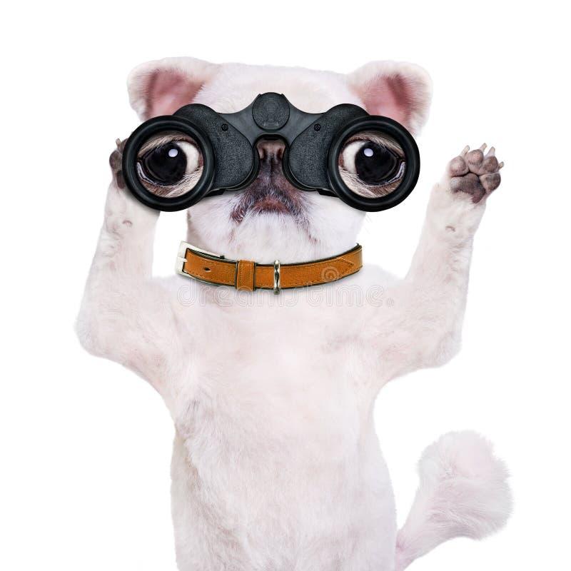 Σκυλί που κοιτάζει μέσω των διοπτρών στοκ φωτογραφία