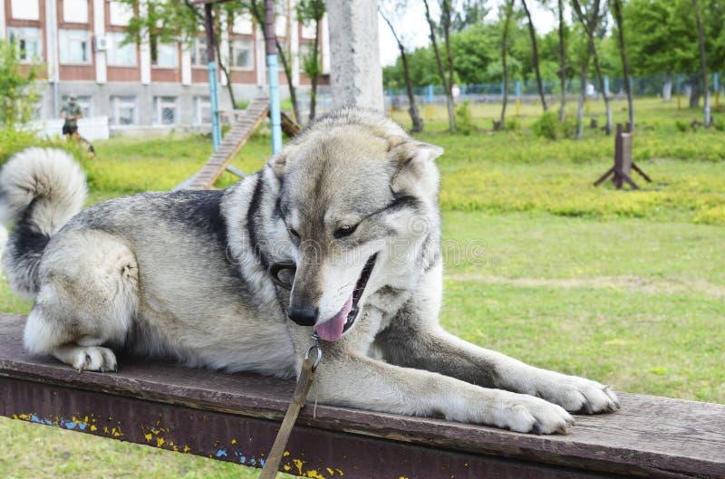 Σκυλί που κοιτάζει λοξά στοκ εικόνες με δικαίωμα ελεύθερης χρήσης