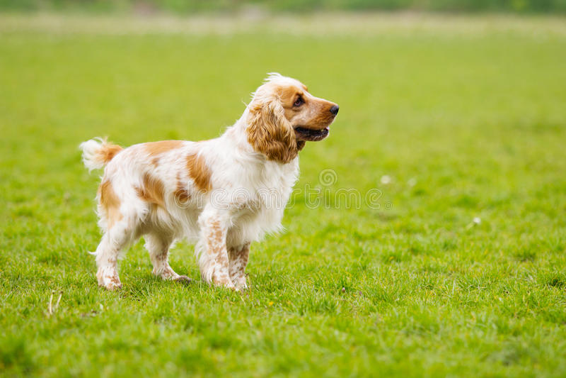 Σκυλί που κοιτάζει λοξά στοκ φωτογραφία με δικαίωμα ελεύθερης χρήσης