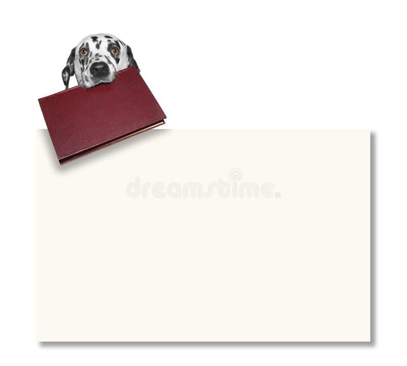 Σκυλί που κρατά ένα βιβλίο δίπλα στο πλαίσιο στοκ εικόνες με δικαίωμα ελεύθερης χρήσης