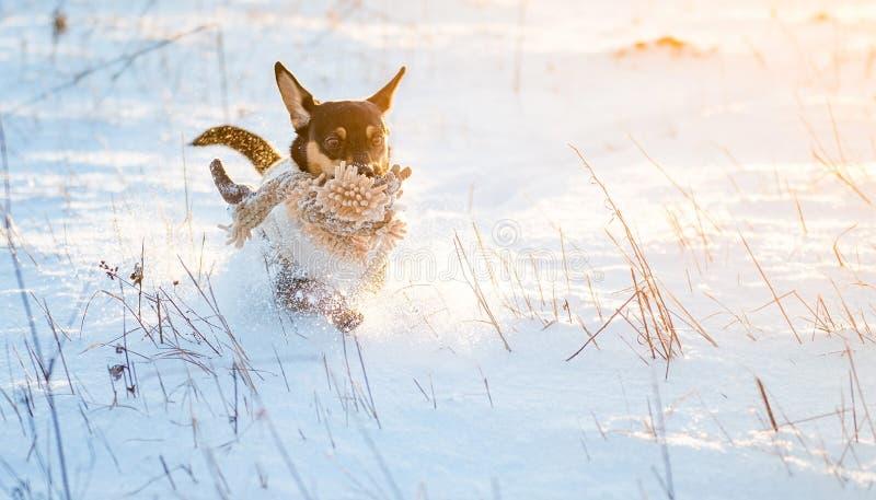 Σκυλί που οργανώνεται στο χειμερινό χιόνι στοκ εικόνα