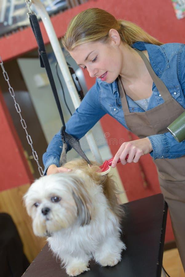 Σκυλί που παίρνει βουρτσισμένο στο σαλόνι καλλωπισμού στοκ φωτογραφία με δικαίωμα ελεύθερης χρήσης