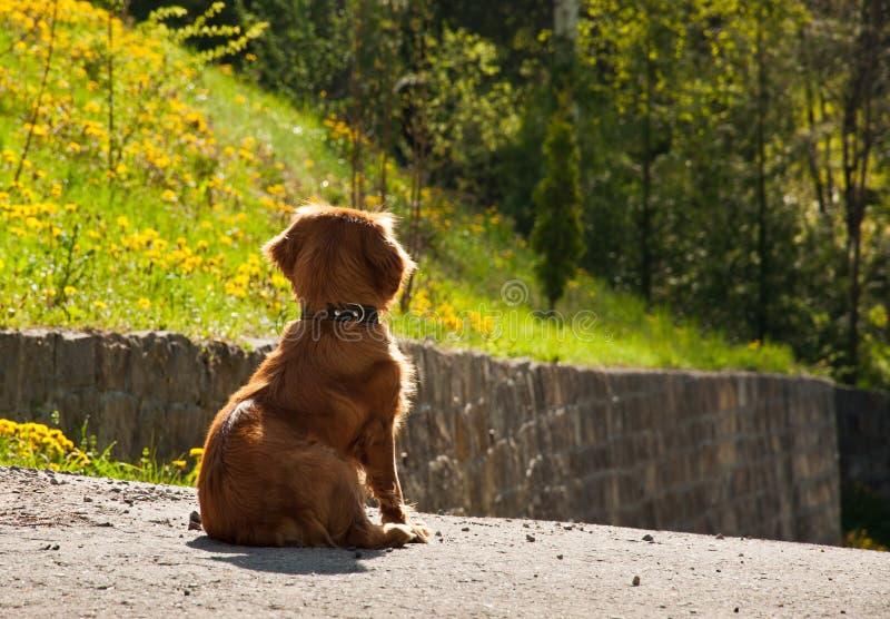 Σκυλί που περιμένει τον ιδιοκτήτη στοκ εικόνα με δικαίωμα ελεύθερης χρήσης