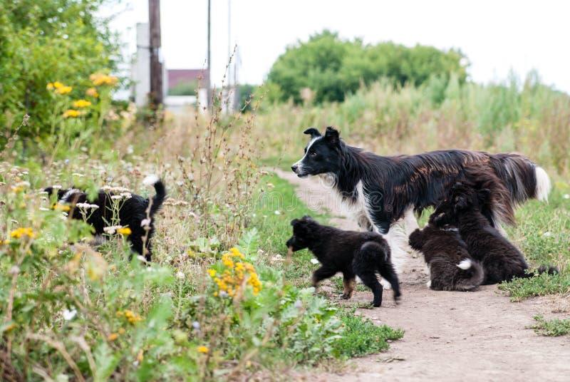 Σκυλί που περπατά στην οδό με τα κουτάβια Απορρόφηση δύο κουταβιών στοκ εικόνες με δικαίωμα ελεύθερης χρήσης