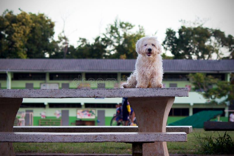 Σκυλί που στέκεται σε έναν πίνακα σε ένα δημόσιο πάρκο στοκ φωτογραφίες