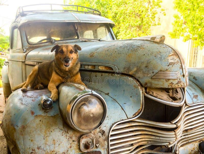 Σκυλί που στηρίζεται πέρα από ένα παλαιό σκουριασμένο αυτοκίνητο στοκ φωτογραφία με δικαίωμα ελεύθερης χρήσης