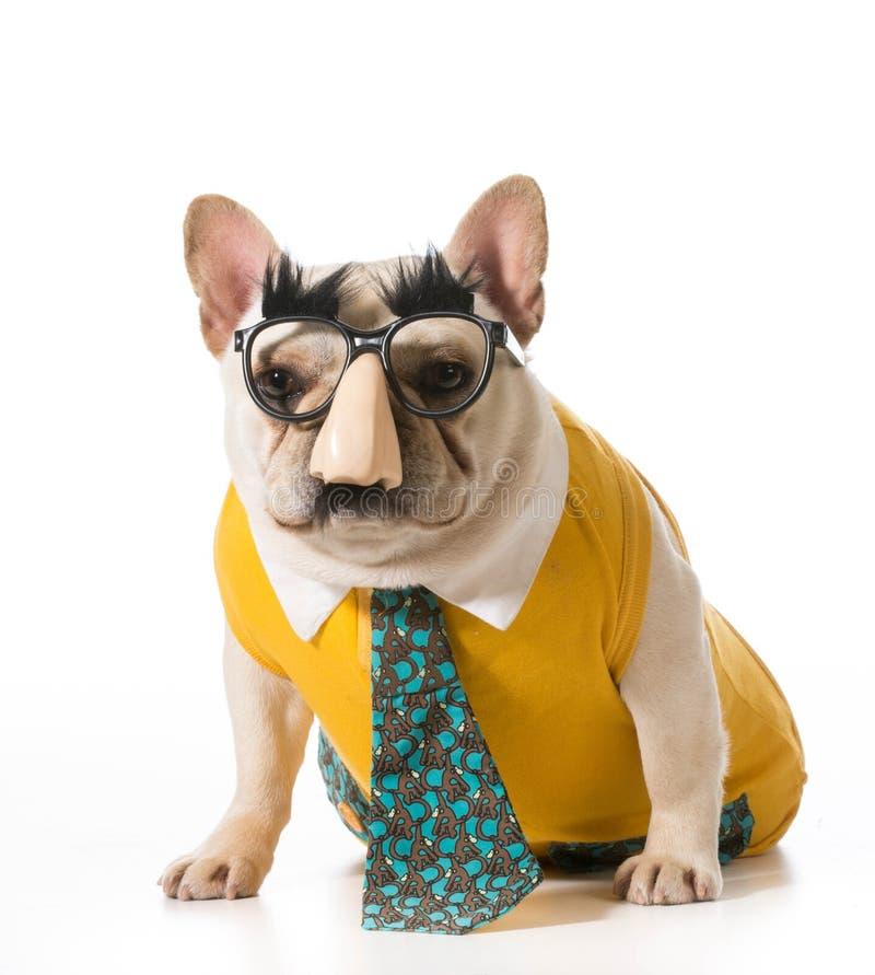 Σκυλί που φορά την ανθρώπινη μεταμφίεση στοκ εικόνες