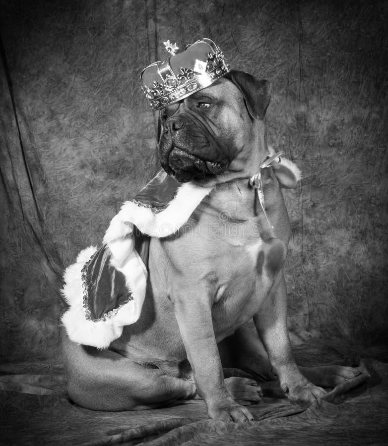 σκυλί που χαλούν στοκ φωτογραφία