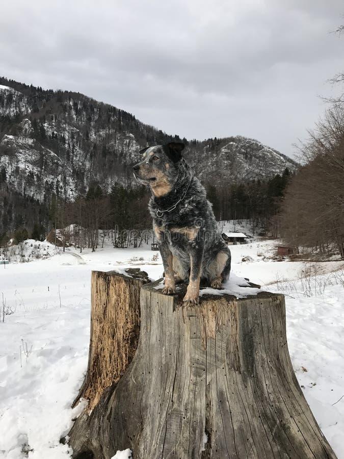 Σκυλί σε ένα μεγάλο κολόβωμα δέντρων στοκ φωτογραφία
