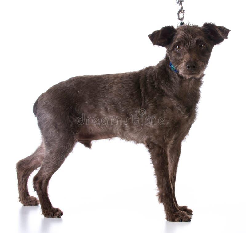Σκυλί σε ένα λουρί στοκ φωτογραφία με δικαίωμα ελεύθερης χρήσης