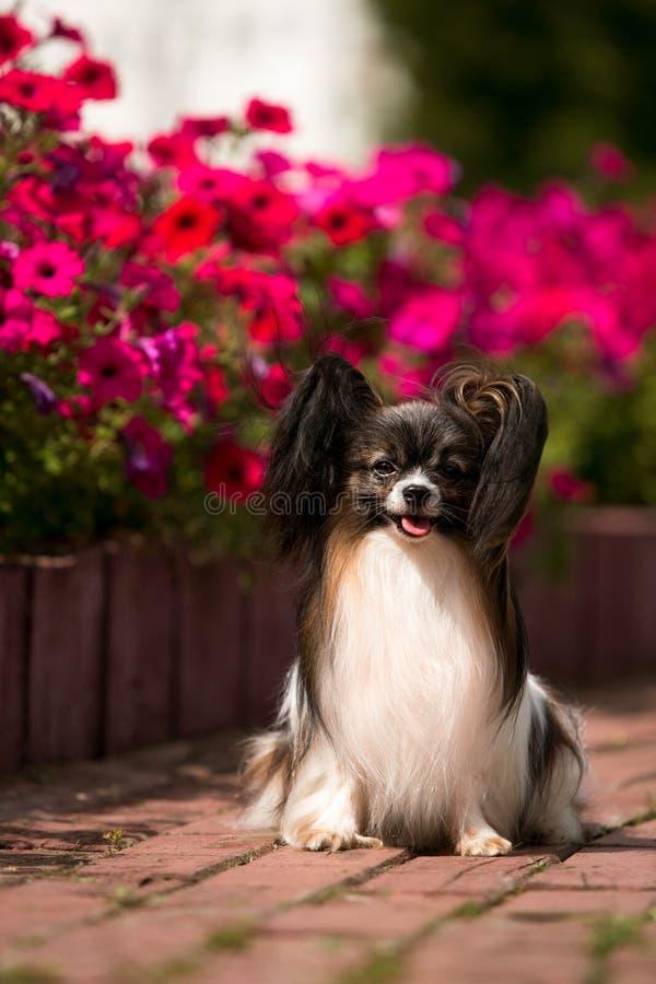 Σκυλί σε ένα υπόβαθρο των κρεβατιών λουλουδιών με την πορφυρή πετούνια στοκ εικόνες