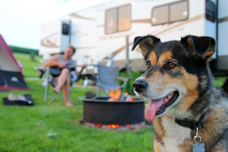 Σκυλί σε Campground μπροστά από την κιθάρα παιχνιδιού ατόμων στοκ εικόνες με δικαίωμα ελεύθερης χρήσης