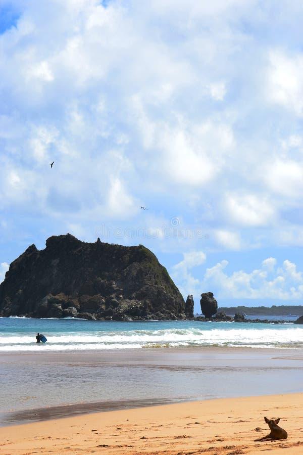 Σκυλί στην παραλία του Fernando de Noronha στοκ εικόνες