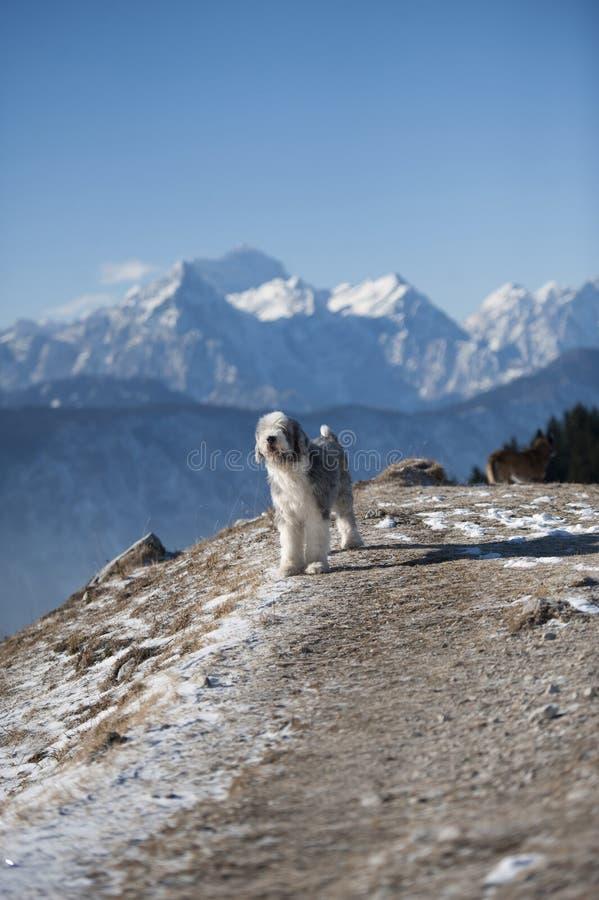 Σκυλί στην όμορφη φύση στα βουνά στοκ φωτογραφία με δικαίωμα ελεύθερης χρήσης