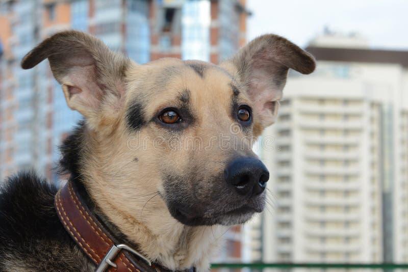 Σκυλί στη μεγάλη πόλη στοκ εικόνες