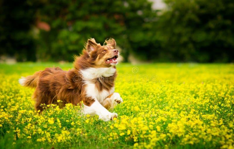 Σκυλί στη δράση στοκ φωτογραφία με δικαίωμα ελεύθερης χρήσης