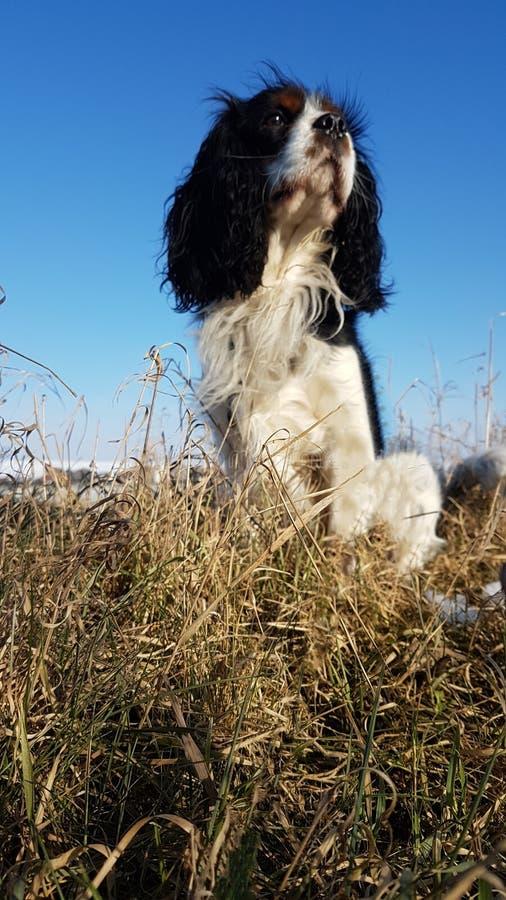 Σκυλί στη φύση στοκ εικόνες με δικαίωμα ελεύθερης χρήσης