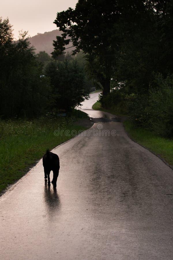 Download Σκυλί στον κενό δρόμο στοκ εικόνα. εικόνα από δρόμος - 62703307