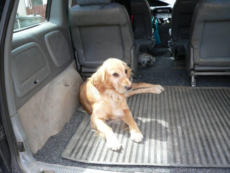 Σκυλί στο αυτοκίνητο στοκ φωτογραφίες με δικαίωμα ελεύθερης χρήσης
