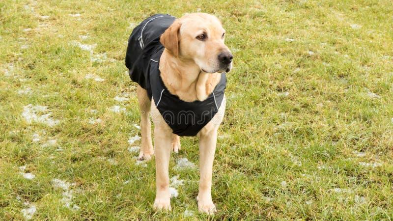 Σκυλί στο αδιάβροχο στοκ εικόνες