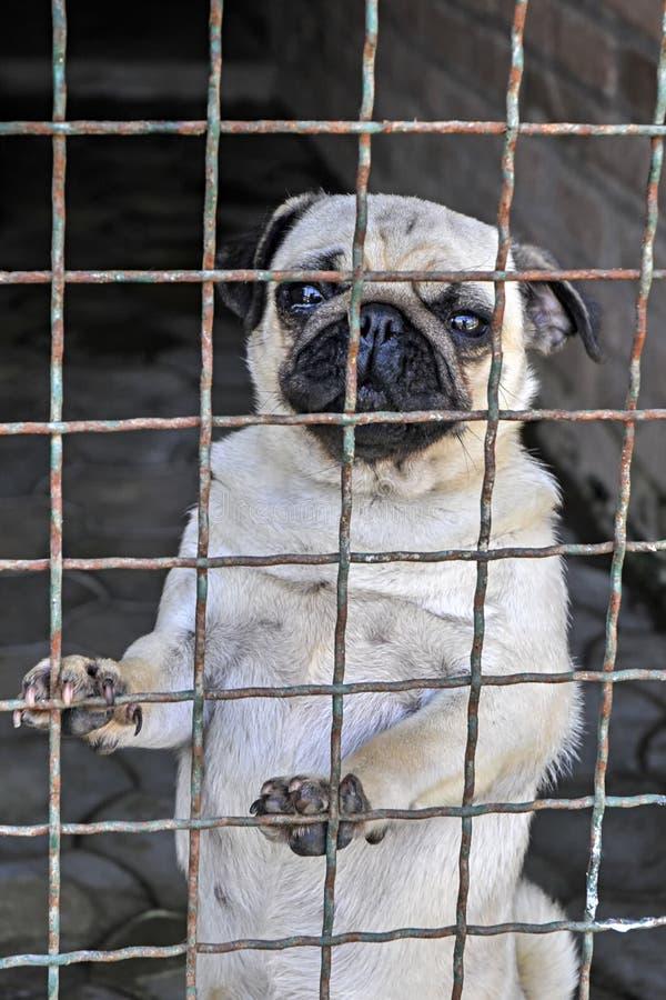 Σκυλί στο καταφύγιο που περιμένει για έγκριση στοκ εικόνα