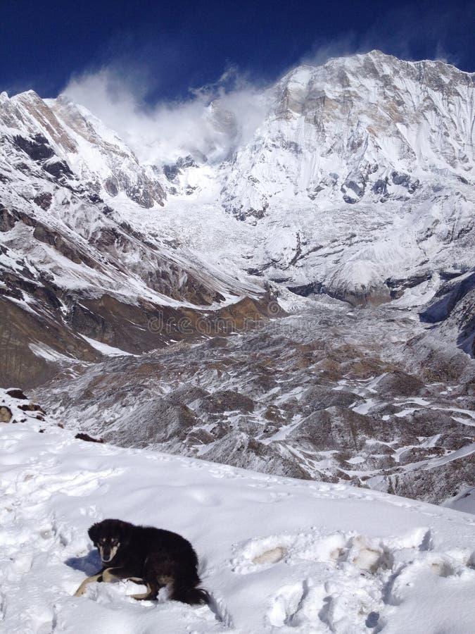 Σκυλί στο νότο Annapurna και το στρατόπεδο βάσεων - Νεπάλ στοκ φωτογραφία με δικαίωμα ελεύθερης χρήσης