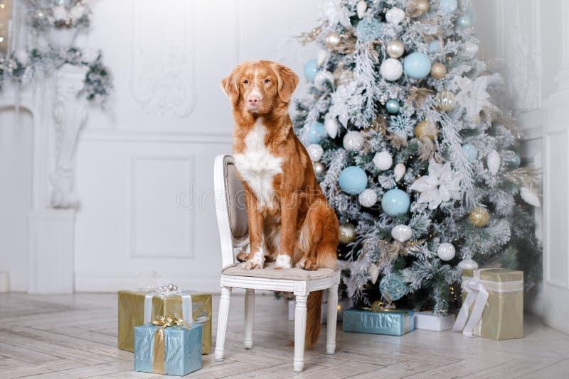 Σκυλί στο τοπίο, τις διακοπές και το νέο έτος, Χριστούγεννα, διακοπές και ευτυχής στοκ εικόνες με δικαίωμα ελεύθερης χρήσης