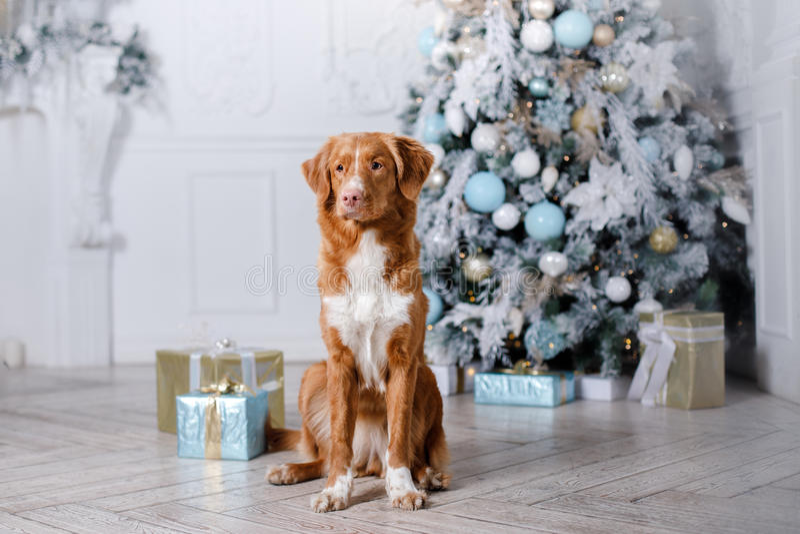 Σκυλί στο τοπίο, τις διακοπές και το νέο έτος, Χριστούγεννα, διακοπές και ευτυχής στοκ φωτογραφίες με δικαίωμα ελεύθερης χρήσης