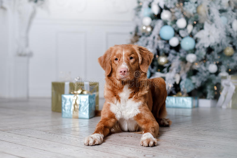 Σκυλί στο τοπίο, τις διακοπές και το νέο έτος, Χριστούγεννα, διακοπές και ευτυχής στοκ φωτογραφίες