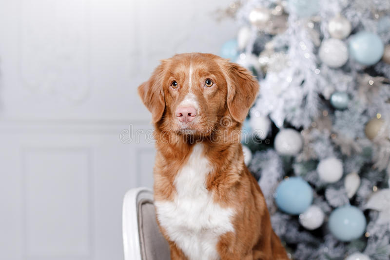 Σκυλί στο τοπίο, τις διακοπές και το νέο έτος, Χριστούγεννα, διακοπές και ευτυχής στοκ εικόνες